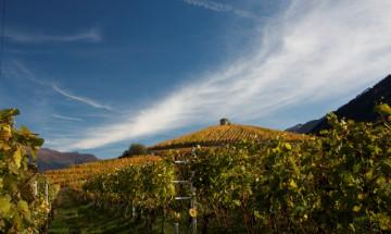 Visita e degustazione vini in un'azienda vinicola valdostana