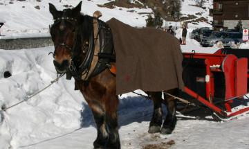 Passeggiate con slitta trainata da cavallo
